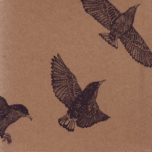 Murmurations coverbandcamp